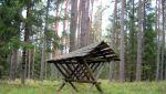 W lesie 025.jpg