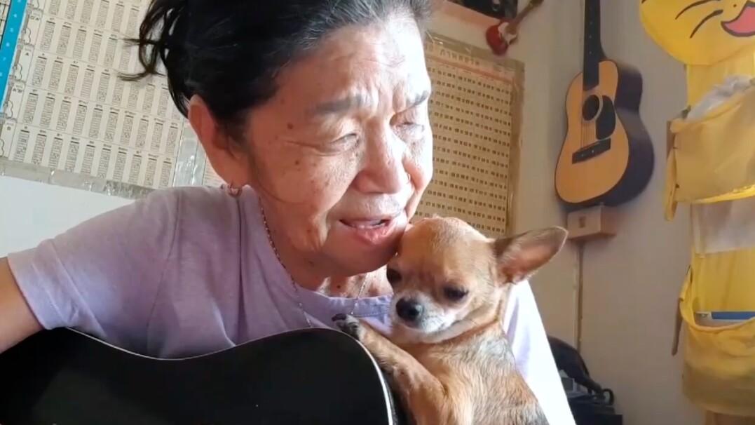 Urocza chihuahua wsłuchana w śpiew swojej pani