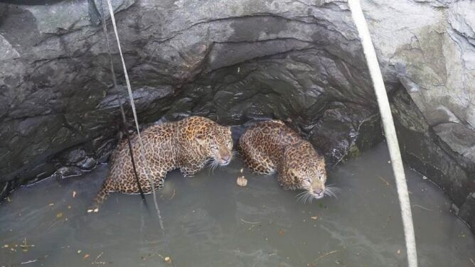 Lamparty w potrzasku. Walcząc, wpadły do głębokiej studni