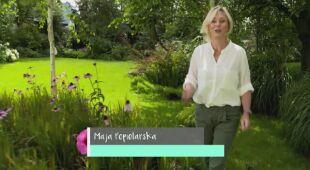 Ogród bylin, hortensji i róż (odc. 666/ HGTV odc.4 seria 2018)