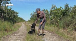 Psy na Florydzie w Stanach Zjednoczonych szkolone do tropienia pytonów